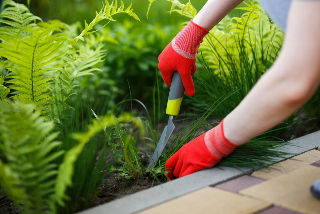 horticulteur horticultrice